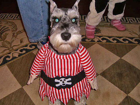 Pirate-dog-2[2]