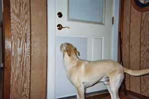 Dog%20At%20Door%20Shield[1]