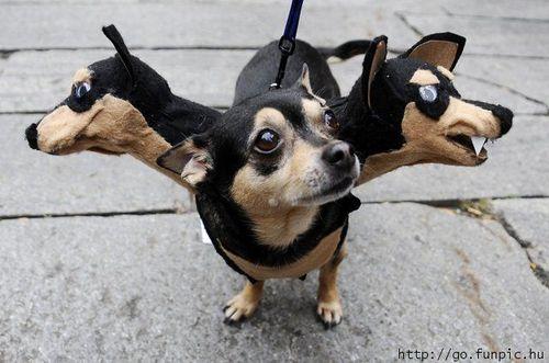 Funny-dog-halloween-costume[1]