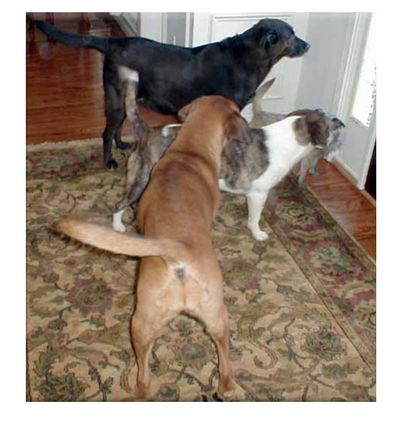 3-dogs-at-door[1]