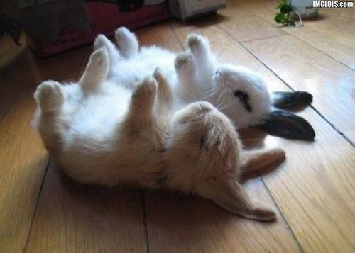 Bunnies-Sleeping-bunny-rabbits-19638180-570-407[1]