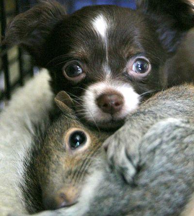 PuppySquirrelAP_450x500[1]