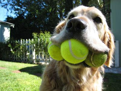 4-0-0-95035-3balldog[1]