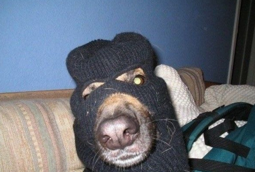 Dog-robber-mask[1]