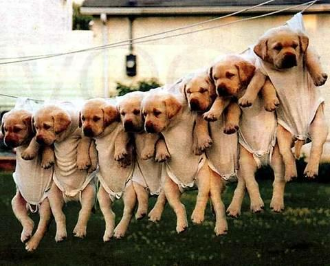 Hanging_puppies[1]
