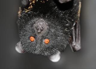 520_0_0_0_0_Bat2[1]