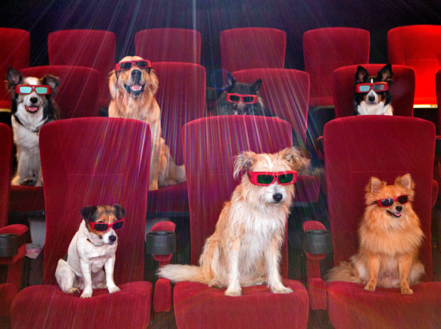 Dogs-3d-glasses_1683568i[1]